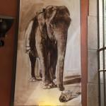 ELEPHANT 2 BASTIDE ROSE 030607