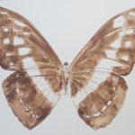 papillon-brou-de-noix-sur-carton-100x150-cm-2016